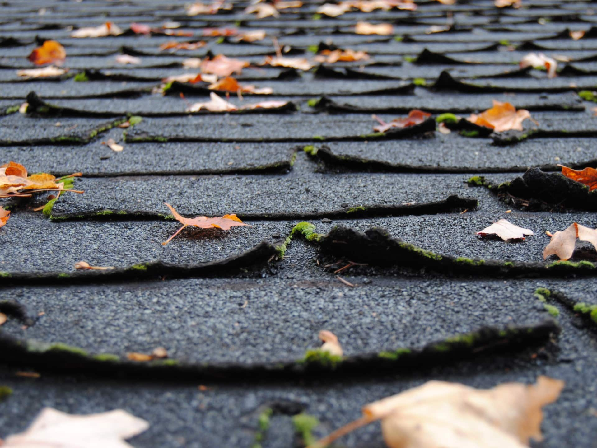 old shingles showing signs of needing a new roof