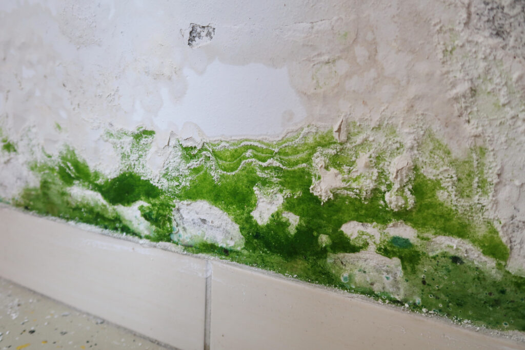Green mold on the wall of a home